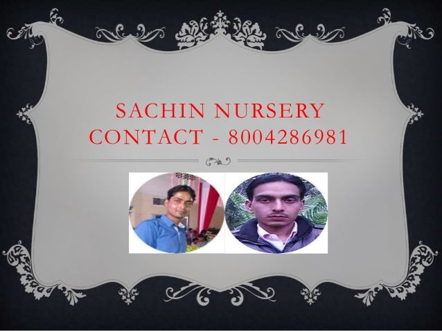 SACHIN NURSERY CONTACT - 8004286981