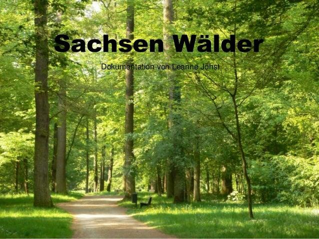 Sachsen Wälder  Dokumentation von Leanne Johst