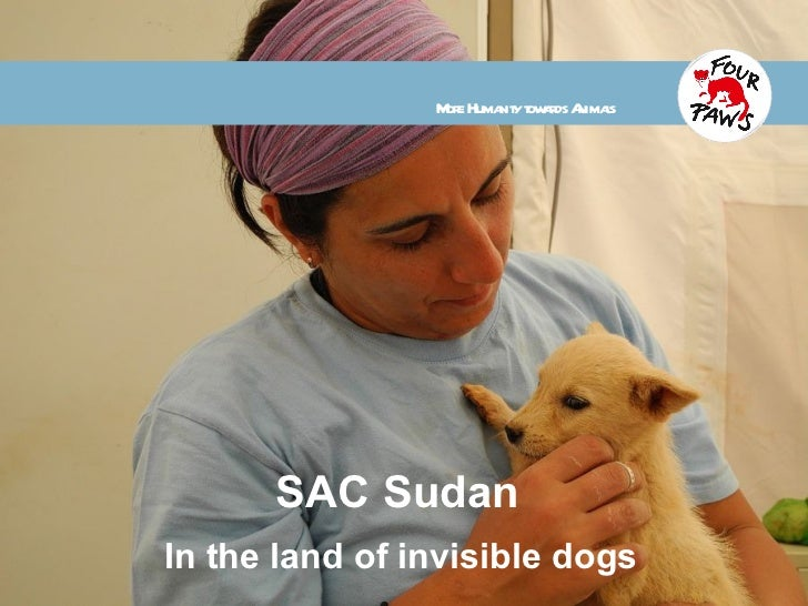 SAC Sudan In the land of invisible dogs More Humanity towards Animals