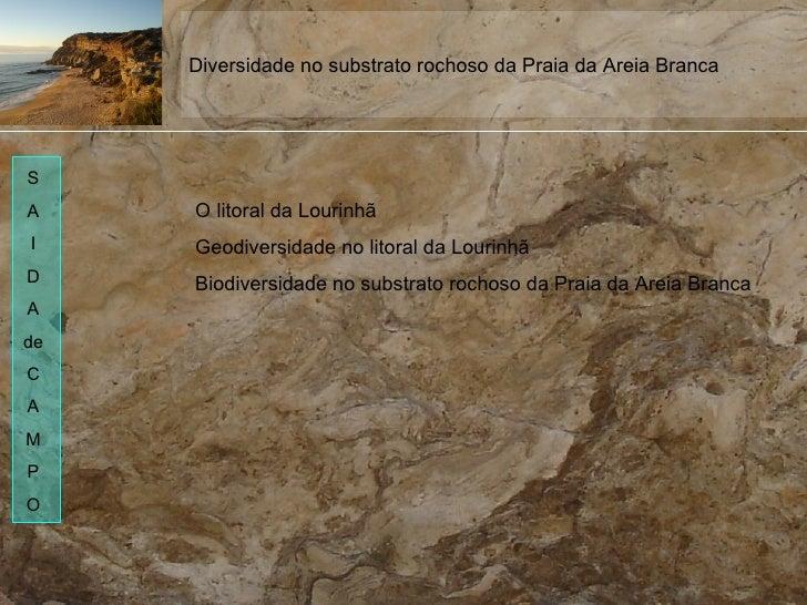 O litoral da Lourinhã Geodiversidade no litoral da Lourinhã Biodiversidade no substrato rochoso da Praia da Areia Branca D...