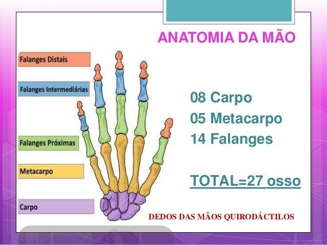 ANATOMIA DA MÃO 08 Carpo 05 Metacarpo 14 Falanges TOTAL=27 osso DEDOS DAS MÃOS QUIRODÁCTILOS