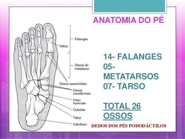 ANATOMIA DO PÉ 14- FALANGES 05- METATARSOS 07- TARSO TOTAL 26 OSSOS DEDOS DOS PÉS PODODÁCTILOS