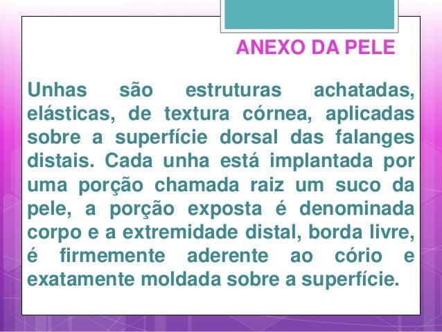 ANEXO DA PELE Unhas são estruturas achatadas, elásticas, de textura córnea, aplicadas sobre a superfície dorsal das falang...
