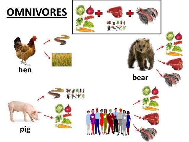 Hen Food List