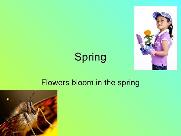 Spring Flowers bloom in the spring