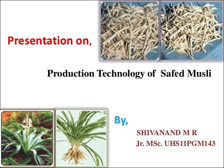 Presentation on,       Production Technology of Safed Musli                     By,                           SHIVANAND M ...