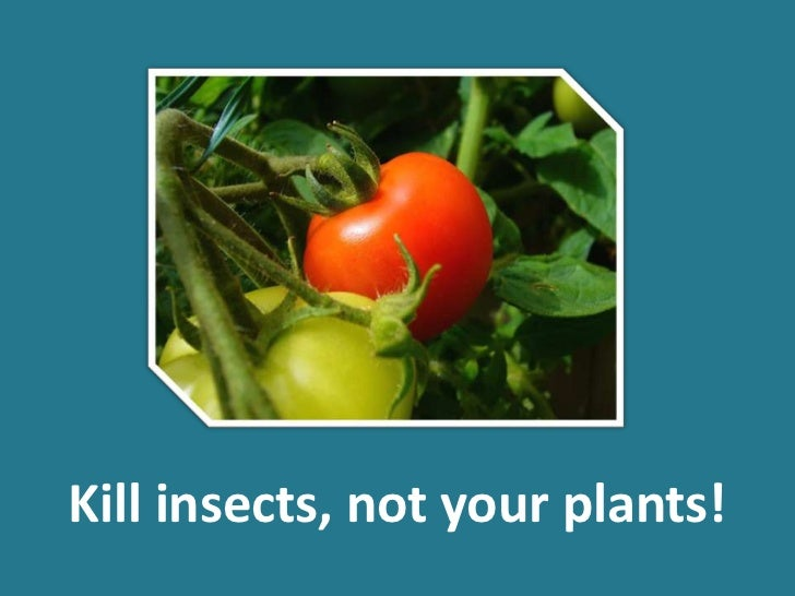 Kill insects, not your plants!<br />