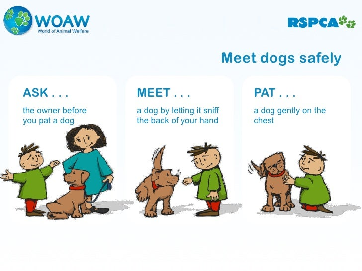 Dog Speak Communicating With Dogs Safely Ages 9 And Over