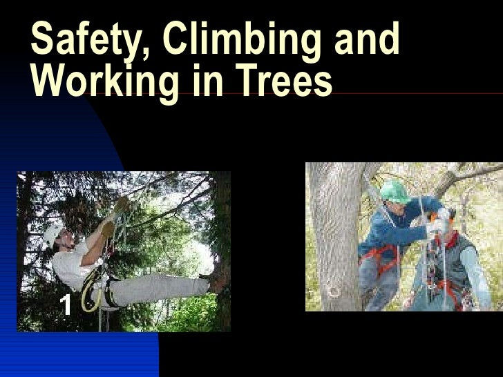 Safety, Climbing and Working in Trees