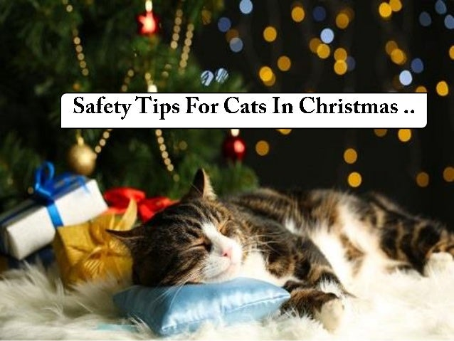 Always Keep The trees covered if possible or Ensure the Cat should not be alone in the room..