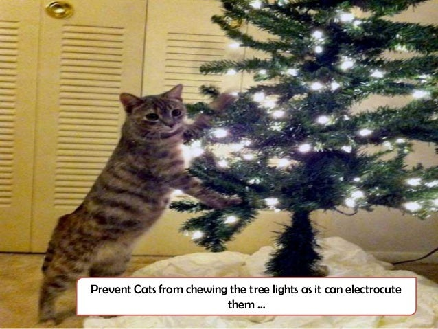 poisonous plants for christmas decoration - Are Christmas Trees Poisonous To Cats