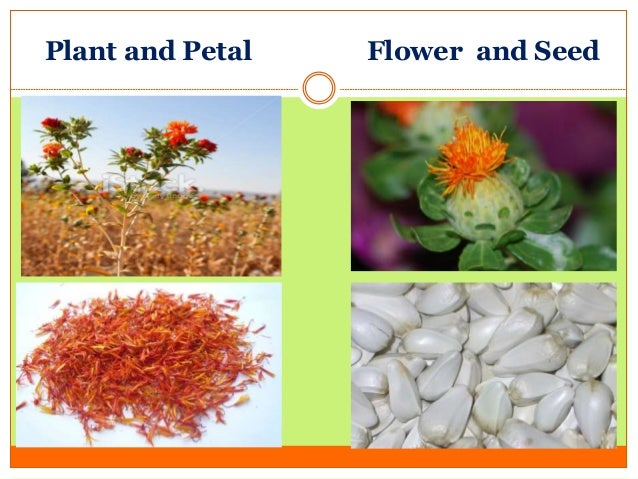 plant and petal flower and seed