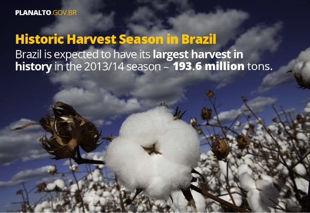 Agrobusiness consolidates Brazil as a global player in production and exportation of food