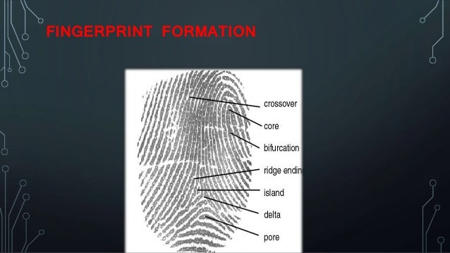 Fingerprint recognition system by sagar chand gupta