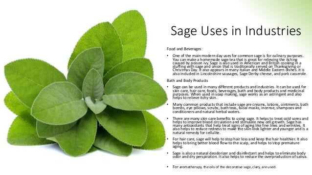 Sage Uses in Industries Food and Beverages • One of the main modern day uses for common sage is for culinary purposes. You...