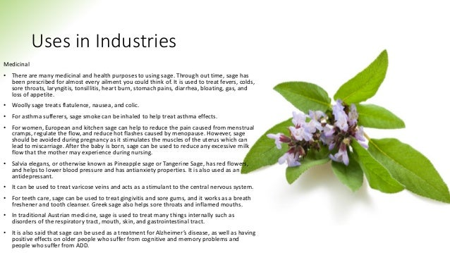 Uses in Industries Medicinal • There are many medicinal and health purposes to using sage. Through out time, sage has been...