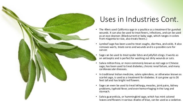 Uses in Industries Cont. • The 49ers used California sage in a poultice as a treatment for gunshot wounds. It can also be ...