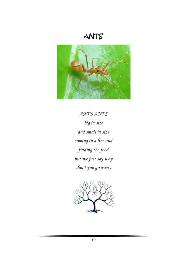 Nature - Sai Magh Reddy Poetry