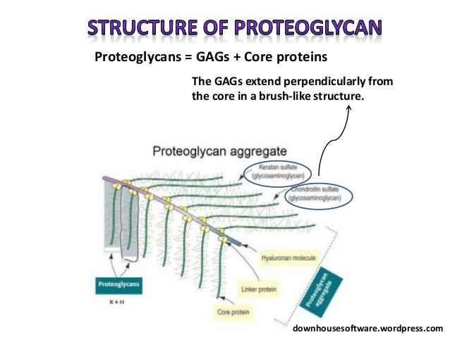 proteoglycans and glycoproteins