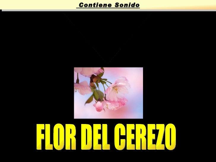 SAKURA FLOR DEL CEREZO Contiene Sonido
