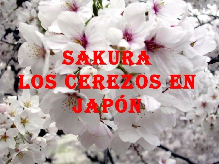 SAKURA Los Cerezos en Japón