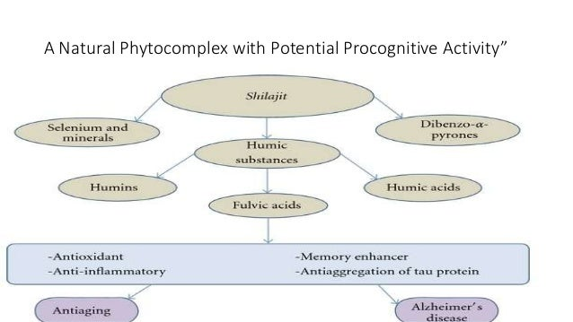"""A Natural Phytocomplex with Potential Procognitive Activity"""""""