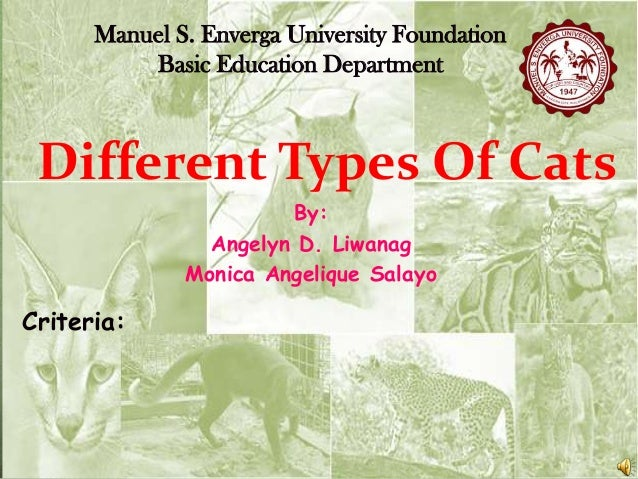 Manuel S. Enverga University Foundation Basic Education Department  Different Types Of Cats By: Angelyn D. Liwanag Monica ...