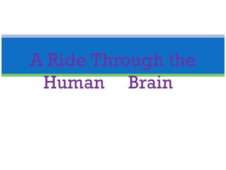 A Ride Through the Human  Brain