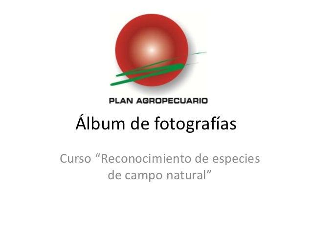 """Álbum de fotografíasCurso """"Reconocimiento de especies        de campo natural"""""""