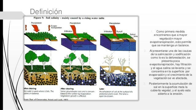 Salinizaci n y sodificaci n for Significado de suelo