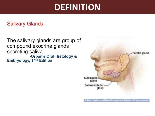 Saliva and salivary glands