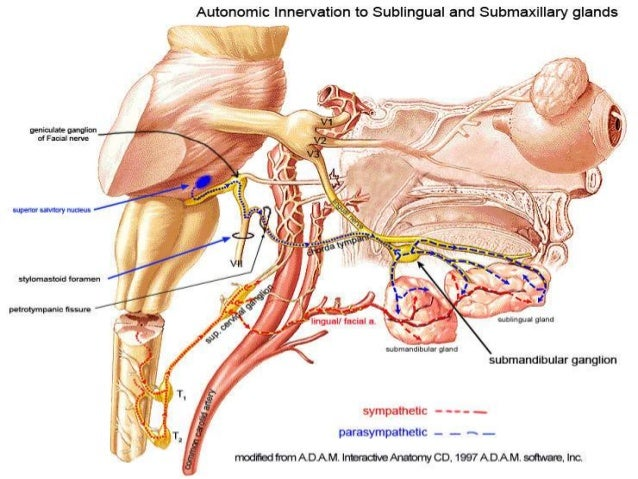 Submandibular duct dissection