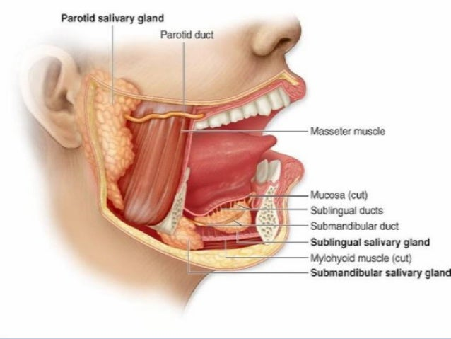 Paf dans la bouche de scarlet red - 3 3