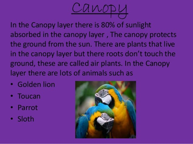Canopy In the Canopy layer ...  sc 1 st  SlideShare & Sally Tina Ramza