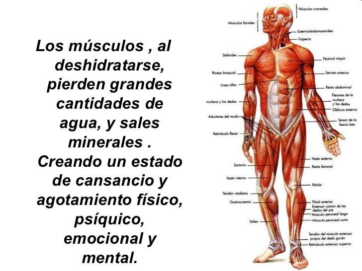 Los músculos , al  deshidratarse, pierden grandes  cantidades de   agua, y sales    minerales .Creando un estado  de cansa...