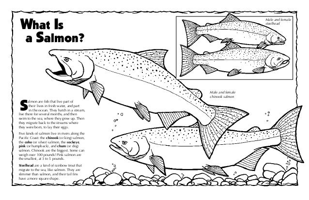 The Pacific Salmon and Steelhead Coloring Book