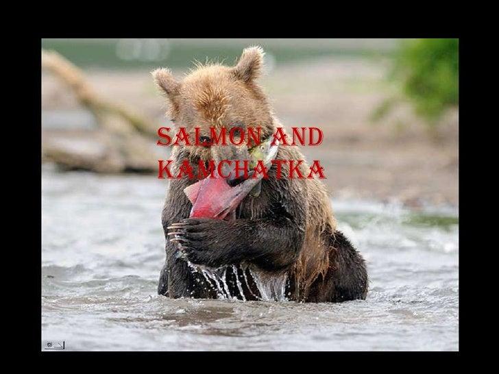 Salmon andKamchatka