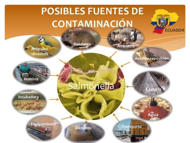 Salmonella - Fuentes de contaminacion de los alimentos ...