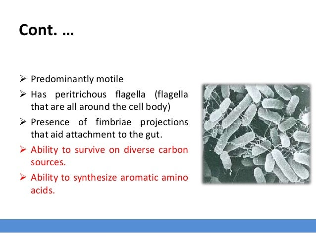 Cont. …  Predominantly motile  Has peritrichous flagella (flagella that are all around the cell body)  Presence of fimb...
