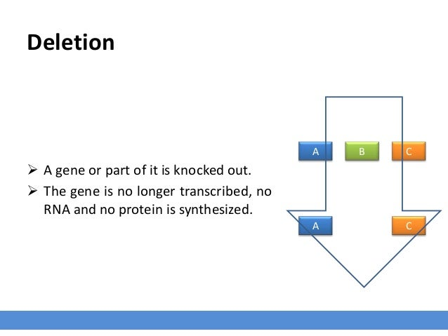 Deletion  A gene or part of it is knocked out.  The gene is no longer transcribed, no RNA and no protein is synthesized....