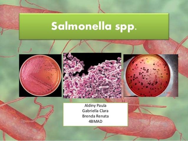 Salmonella spp. Aldiny Paula Gabriella Clara Brenda Renata 4BMAD