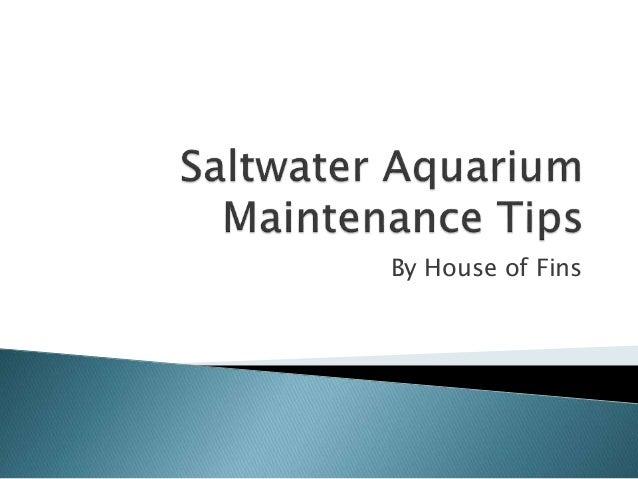 Saltwater Aquarium Maintenance Tips