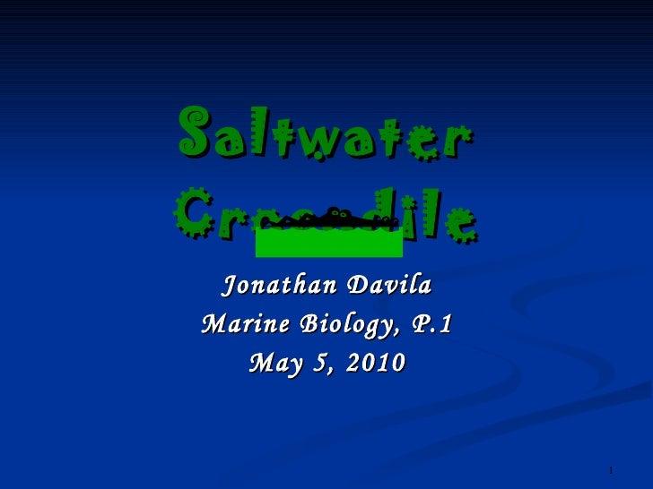 Saltwater Crocodile Jonathan Davila Marine Biology, P.1 May 5, 2010