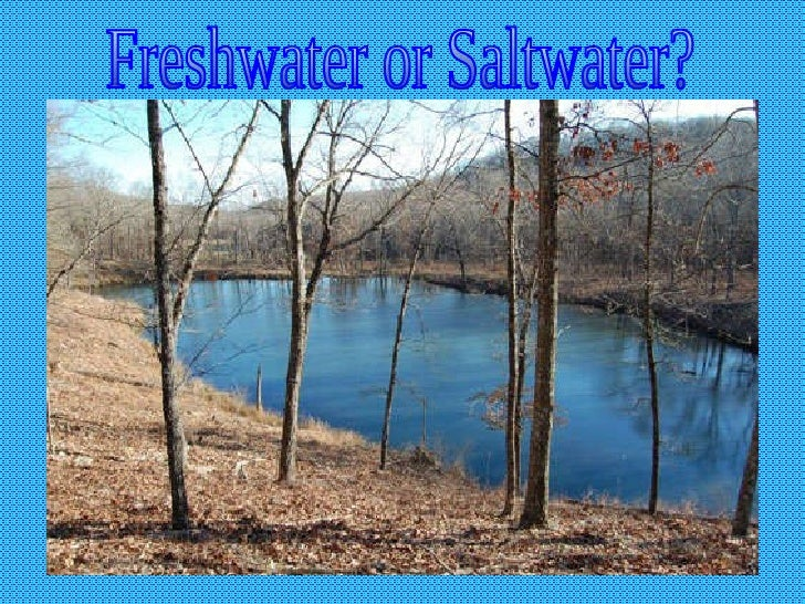Freshwater or Saltwater?