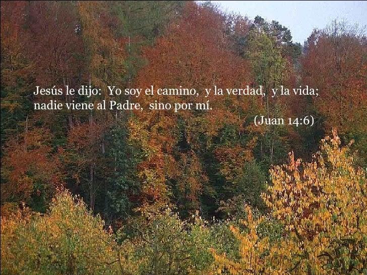 Jesús le dijo:  Yo soy el camino,  y la verdad,  y la vida;  nadie viene al Padre,  sino por mí.  (Juan 14:6)