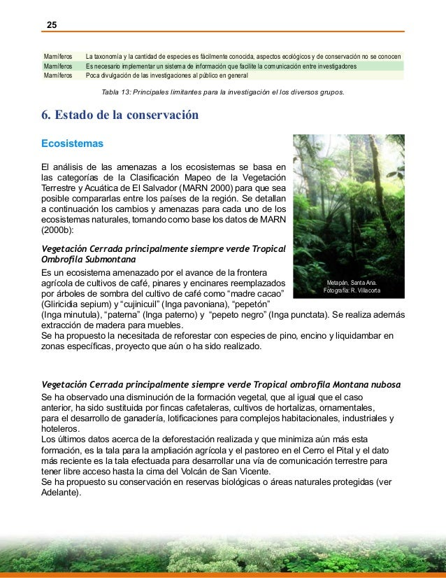 25 Mamíferos La taxonomía y la cantidad de especies es fácilmente conocida, aspectos ecológicos y de conservación no se co...