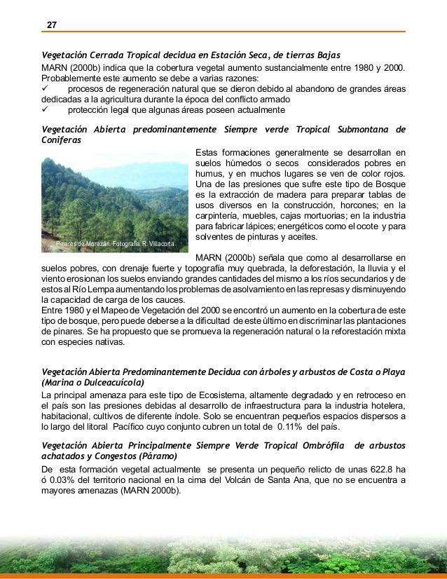 27 Vegetación Cerrada Tropical decidua en Estación Seca, de tierras Bajas MARN (2000b) indica que la cobertura vegetal aum...
