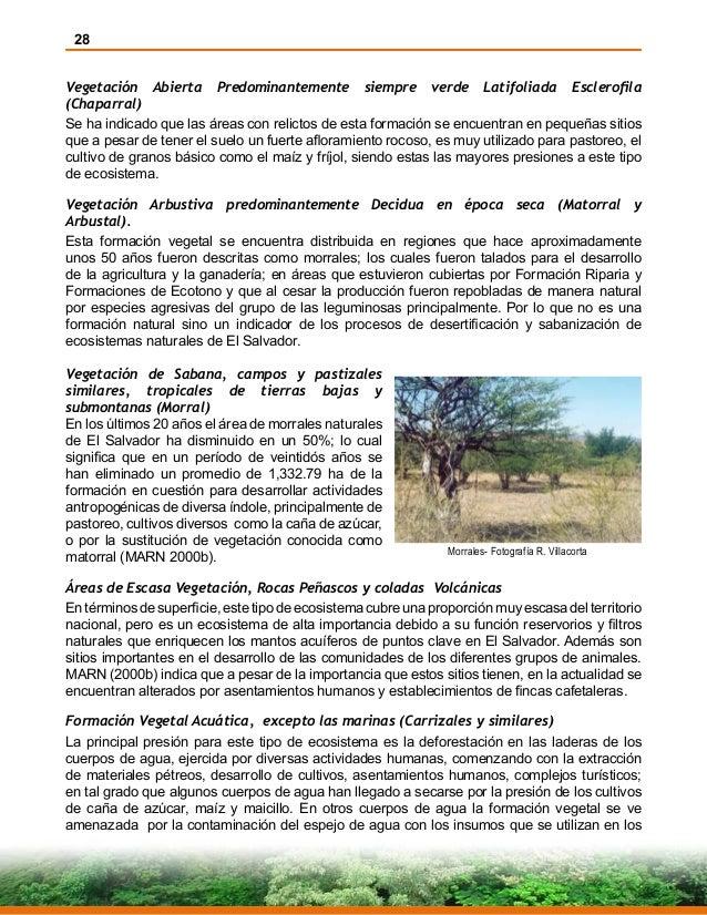 28 Vegetación Abierta Predominantemente siempre verde Latifoliada Esclerofila (Chaparral) Se ha indicado que las áreas con...