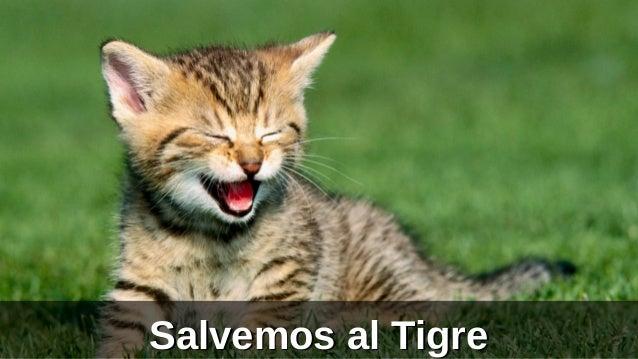 Salvemos al Tigre
