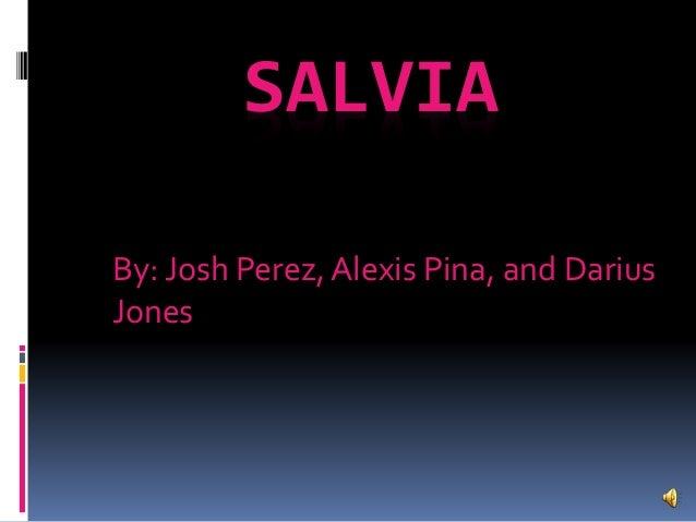 SALVIA By: Josh Perez, Alexis Pina, and Darius Jones